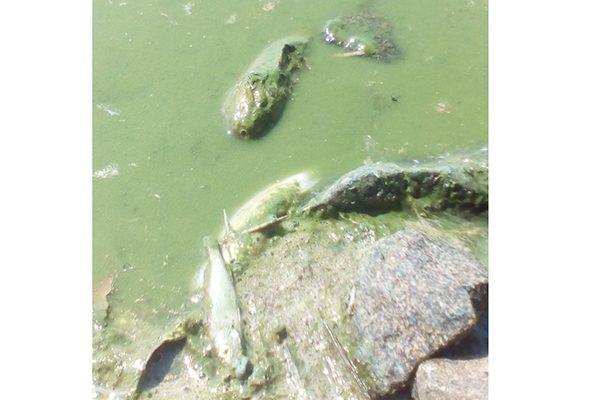 Заражение пруда в Нижнем Тагиле